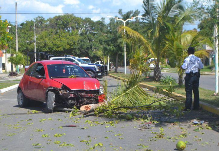 El auto se detuvo en el sentido contrario a la circulación, después de derrumbar una palmera de cocos. (Foto: Redacción/SIPSE)