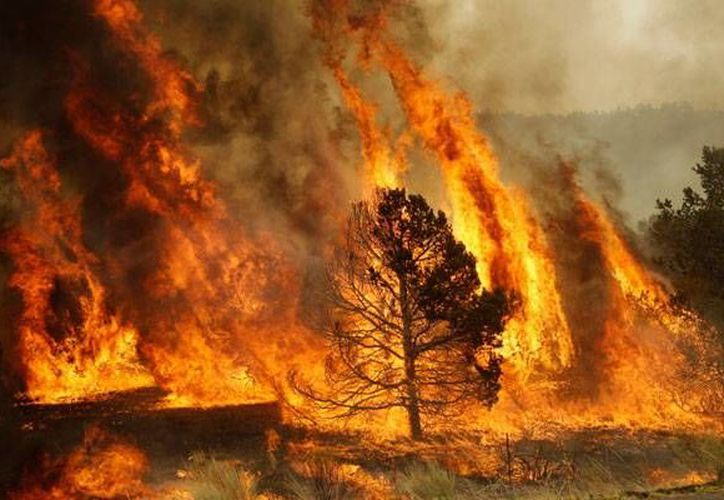 El municipio con mayor número de siniestros es Lázaro Cárdenas con siete incendios forestales. (Contexto/Internet)