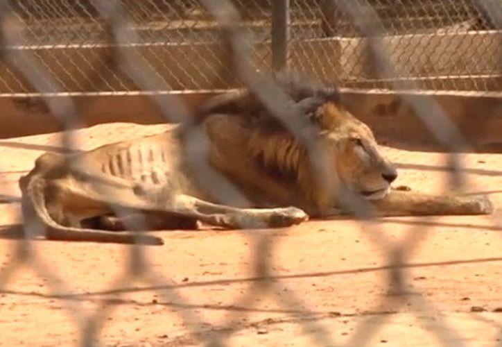 El gobierno niega que esto esté sucediendo e indica que a los animales los tratan como si fueran de la familia. (Foto: Reuters).