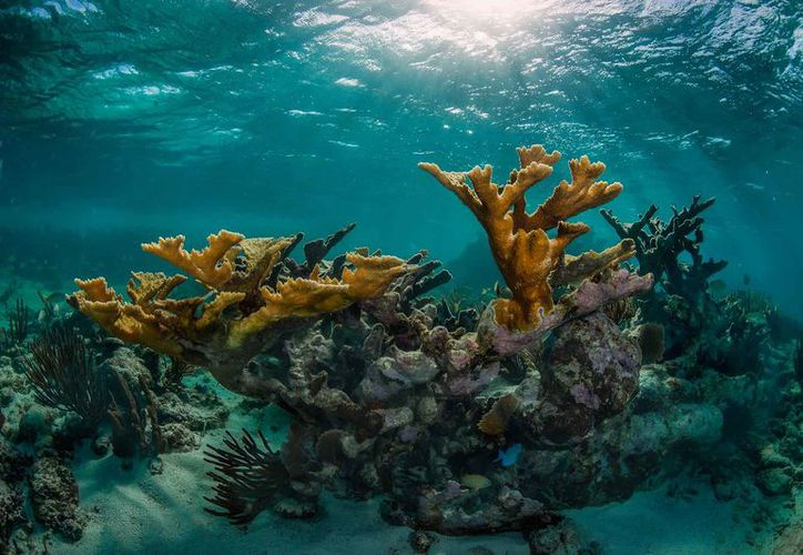 La exposición se realiza en el marco del mes de los arrecifes. (Faride Cetina/SIPSE)