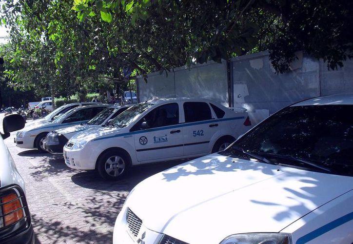 El sindicato de taxistas sumará mil 800 unidades en el municipio. (Adrián Barreto/SIPSE)