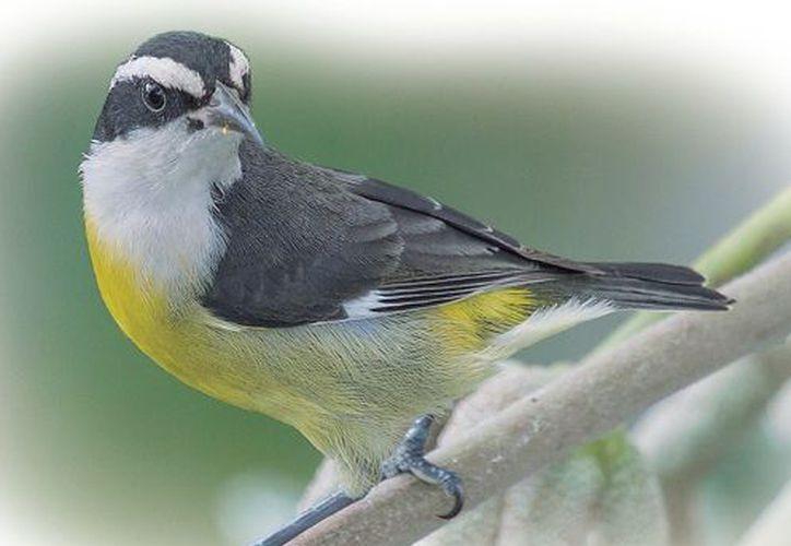 La migración de las especies fue ante la falta de alimento que estuvo limitada por la sequía. (Redacción/ SIPSE)