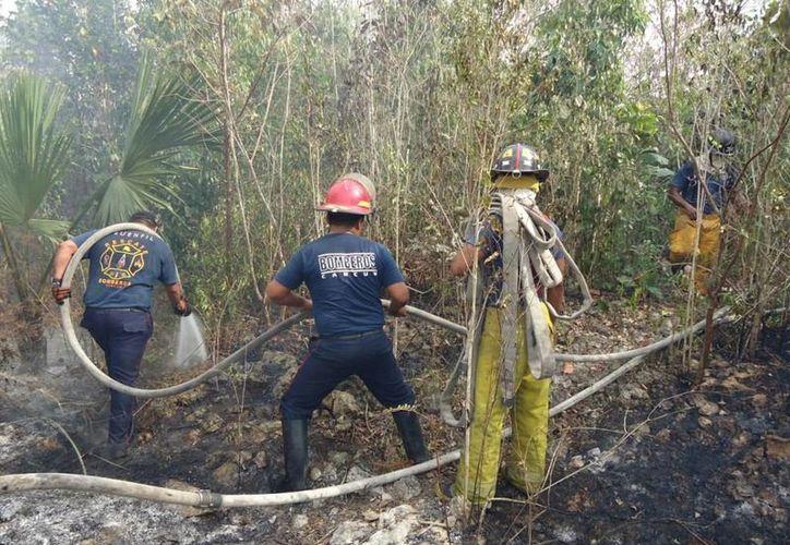 Los bomberos en labores de control de la propagación de incendio forestal. (Licety Díaz/SIPSE)