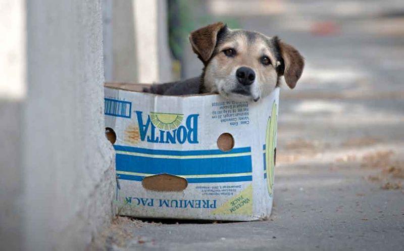 Habrá multas por dar de comer a perros callejeros y no adoptarlos