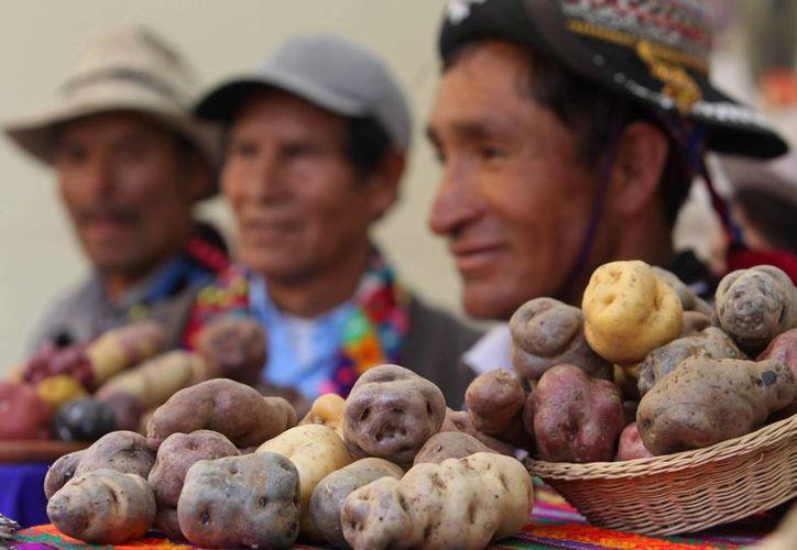 El cultivo de papa en Perú involucra a más de 600 mil familias de 19 regiones; se producen al año 4.5 millones de toneladas del tubérculo. (EFE/Archivo)