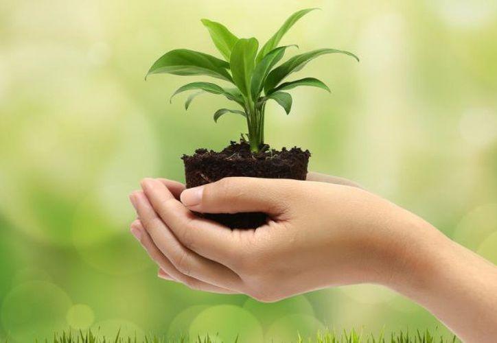 Celebrarán el  Día Mundial del Medio Ambiente el 5 de junio. (Contexto)