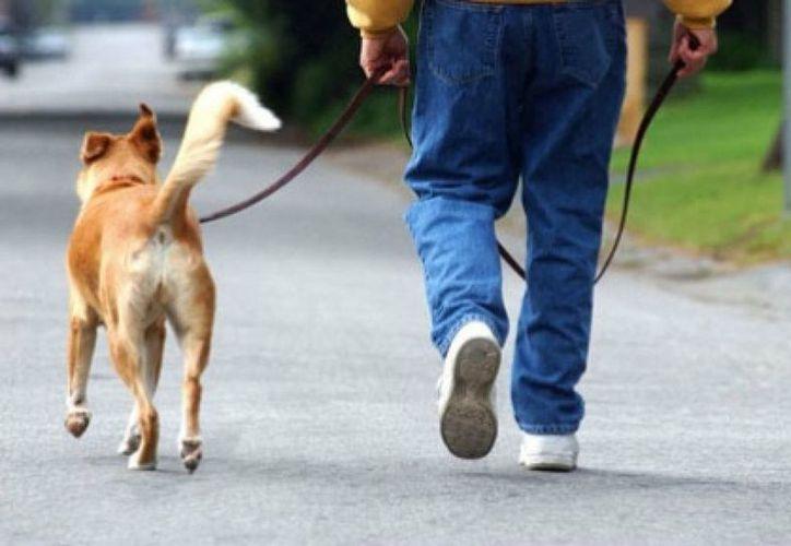 Este Uber para perros ya está disponible para dispositivos Android y iOS. (Mascotas Facilísimo.com)