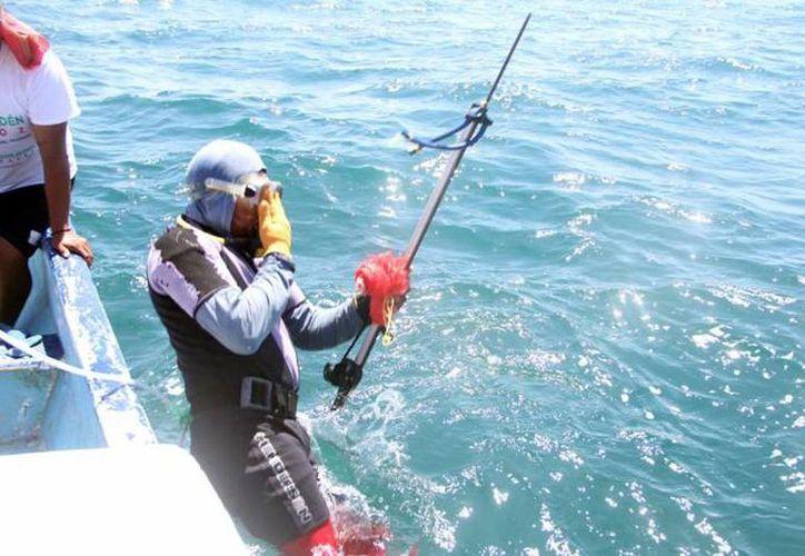 La mayor parte de los pescadores clandestinos no usa el equipo necesario para la captura del pepino de mar. Imagen de un buzo con un arpón en la costa de Yucatán. (Archivo/SIPSE)