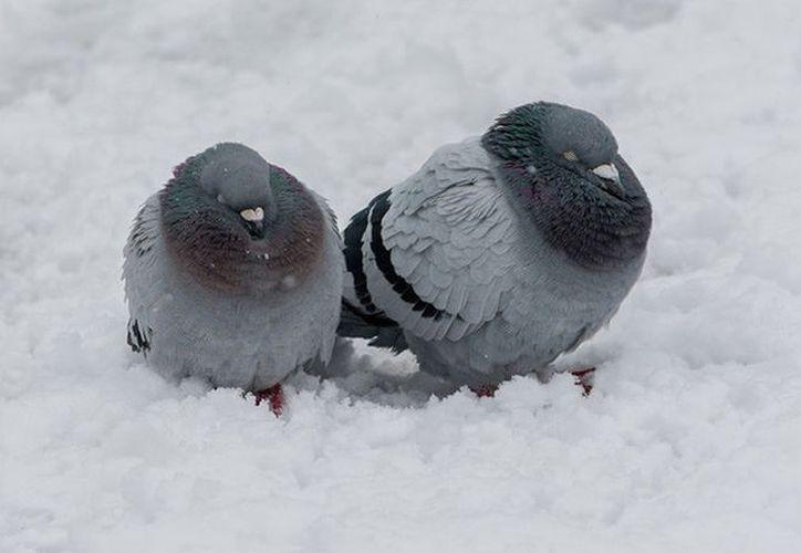 Varios animales han muerto congelados en Kazajistán, donde temperaturas que rondan los 30 grados bajo cero. (Foto: RT)