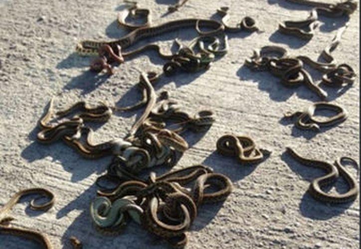 La Profepa encontró 222 reptiles y anfibios en un camión de pasajeros. (Especial)