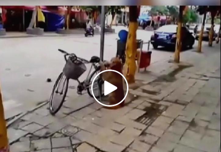 Las imágenes de un perro que cuida la bicicleta de su dueño se han vuelto virales en Internet. (Captura Facebook).