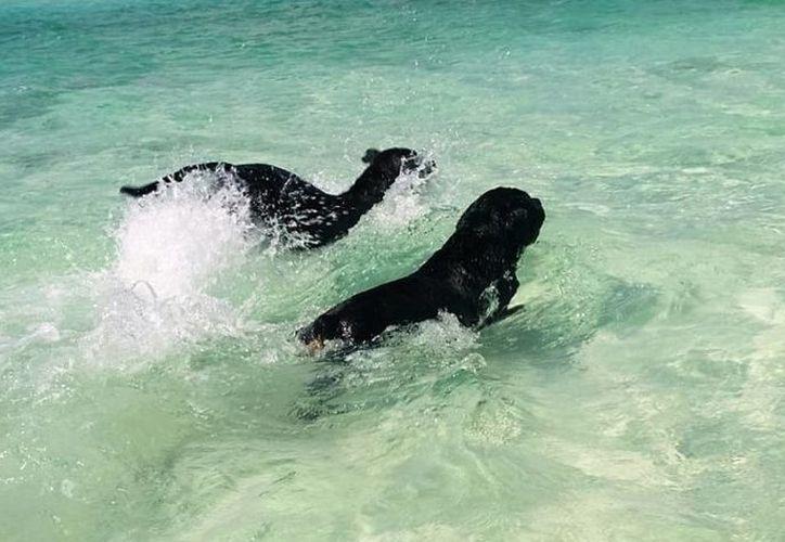 Permiten que dueños de perros los introduzcan en el agua. (Javier Ortiz/ SIPSE)