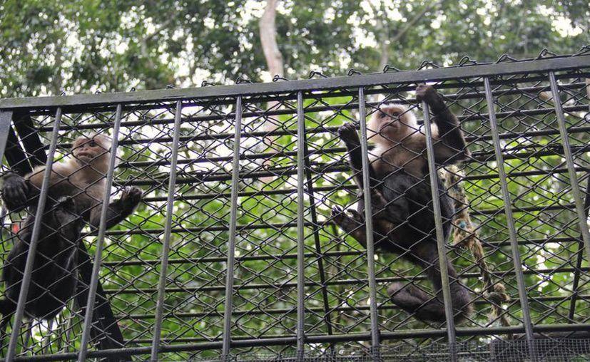Debido a que cuentan con recursos etiquetados para utilizarse este año, los zoológicos de la Ciuda de México no cerrarán en el corto plazo. (Notimex/Foto de contexto)