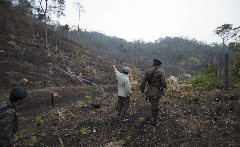 Un ingeniero forestal , en el centro, señala un área quemada por los incendios forestales en la reserva de la Biosfera Maya a un oficial del ejército en Petén, Guatemala. (Agencias)