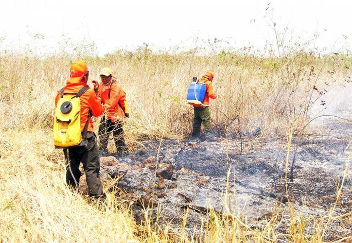 Este año Yucatán registró una baja de incendios forestales. (SIPSE)