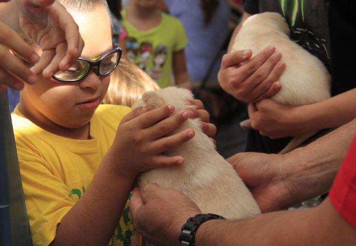 El poder jugar un poco con los cachorros, fue algo muy importante y especial para Camila y Stephani. (Consuelo Javier/SIPSE)