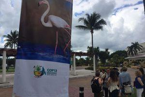 Imágenes previo a la COP 13 en Cancún