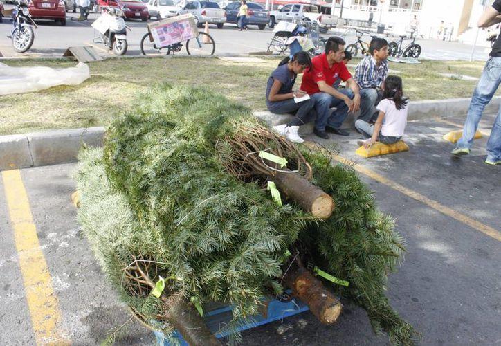 Exhortaron a la población a llevar estos árboles a la unidad para convertirlos en material orgánico. (Archivo/SIPSE)
