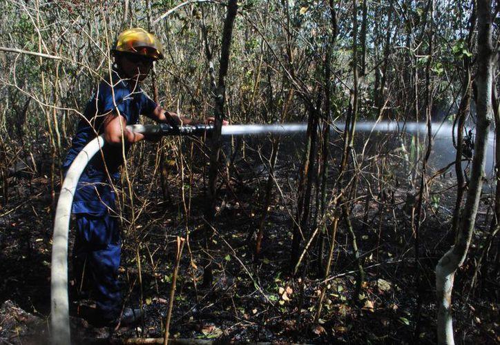 Esperan que la isla logre por quinto año consecutivo sin incendios forestales. (Redacción/SIPSE)