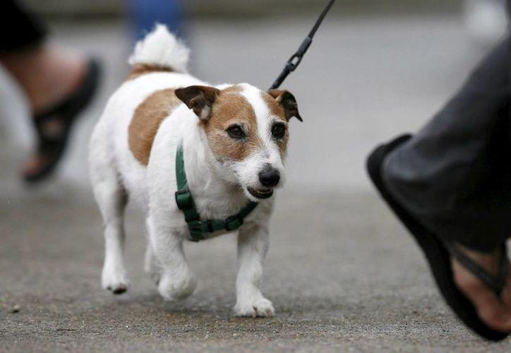 Los animales son más inteligentes en su funcionamiento mecánico, indica estudio. (EFE)