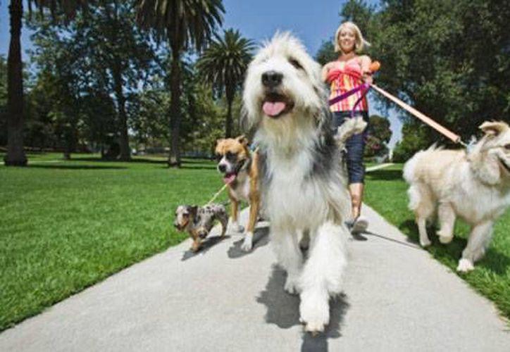 El evento tiene como objetivo la sana convivencia entre dueños con sus mascotas. (Contexto/Internet)