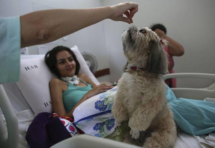 La paciente de 20 años Gleisiane Oliveira observa a un perro Shitzu llamado Mille recibir un premio en su cama en el Hospital de Apoyo de Brasilia, Brasil. (AP/Eraldo Peres)