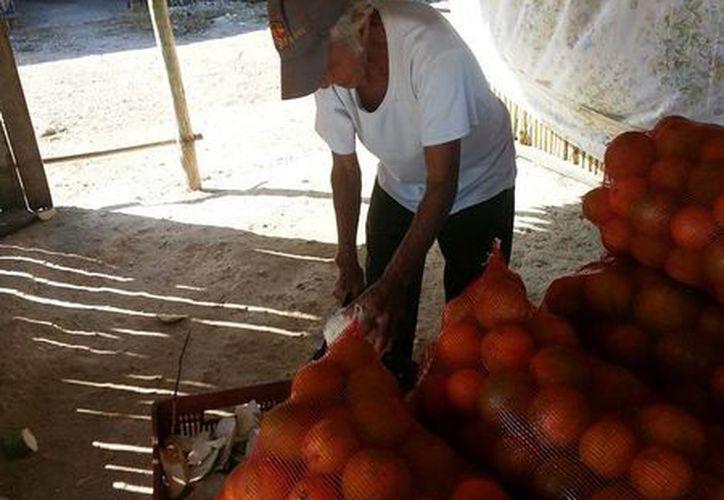 Comerciantes y productores diversos recuperan optimismo tras la ligera recuperación del precio de la vara dulce. (Edgardo Rodríguez/SIPSE)