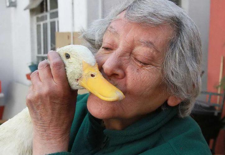 Para 2021, el número de personas en el país con demencia senil aumentará a 950 mil casos. (Archivo/Notimex)