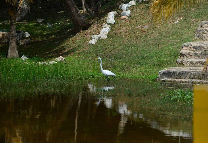 Lo que era terreno baldío se convirtió en zona verde de esparcimiento con aves. (Milenio Novedades)