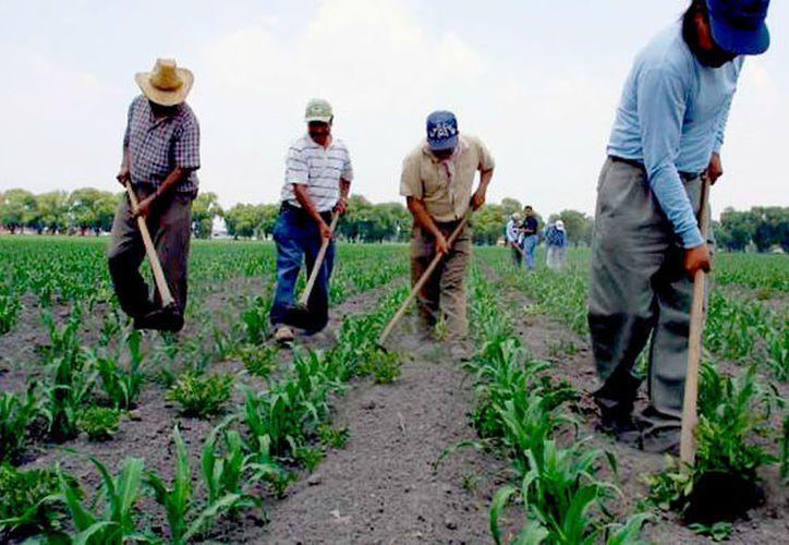 Las semillas serán entregadas a los municipios para que las hagan llegar a los que realmente siembran la tierra. (Redacción)