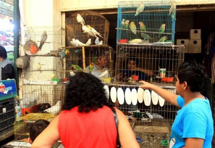 Los <i>dueños</i> de las aves aseguradas por la Profepa deberán cumplir todos los trámites para tener la custodia legal de las bestias, so pena de que se inicie un proceso legal. (SIPSE/Foto de contexto)