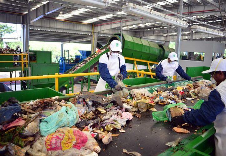 El martes entró en funciones la planta de separación de residuos sólidos en Mérida. (Milenio Novedades)