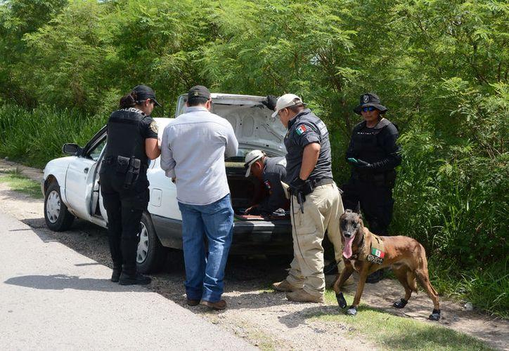 En un retén policiaco fueron detenidas 3 personas que transportaban marihuana, en el periférico de Mérida. (Victoria González/SIPSE)