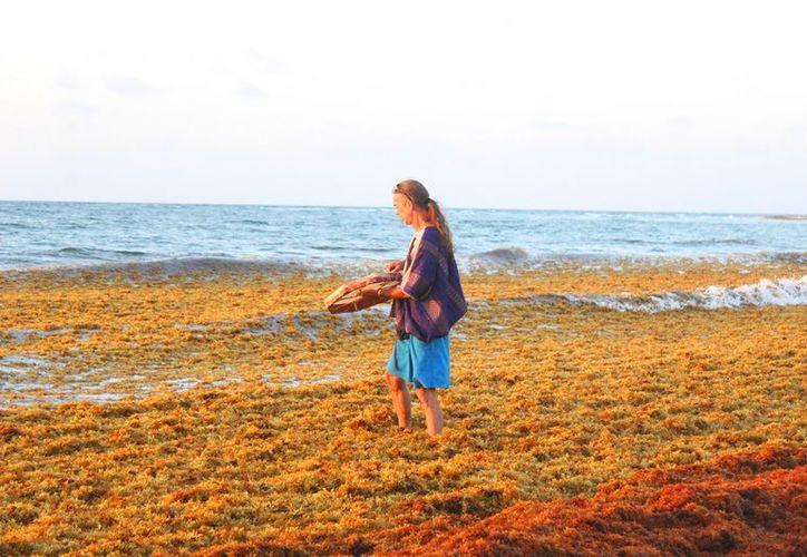 Importante la preservación de la tortuga marina. (Foto: Octavio Martínez)