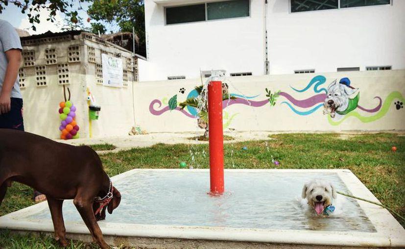 (Facebook/K'íiwik - Parque canino Chetumal)