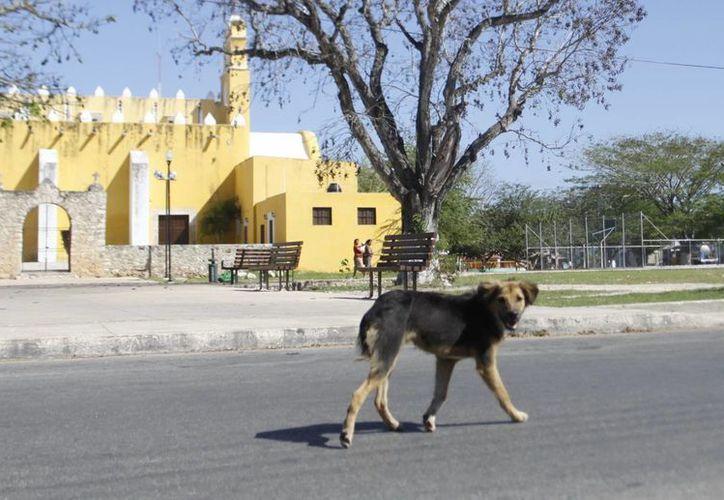 En Cholul temen un rebrote de rabia ante la gran cantidad de perros callejeros. (Christian Ayala/SIPSE)