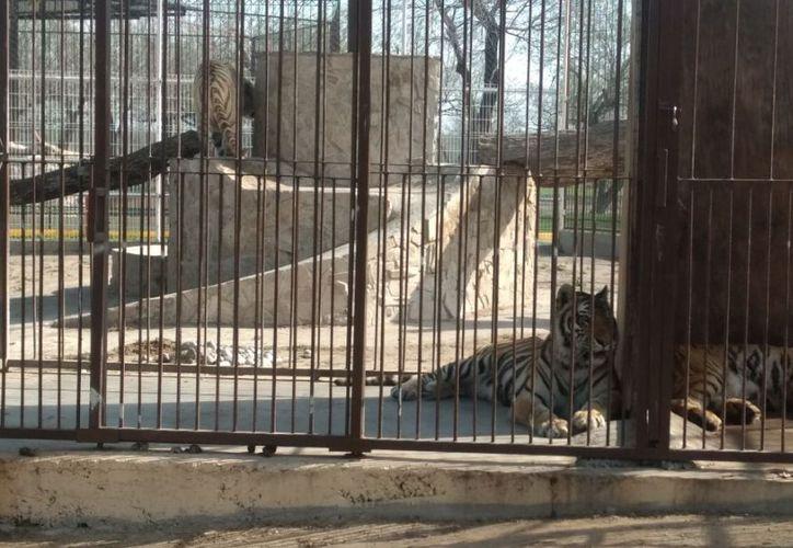Policía Investigadora descubrió un parque ecológico abandonado con animales vivos en Reynosa. (Foto: PGJ Tamaulipas)