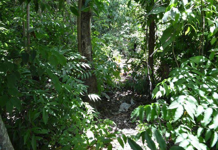 Al fondo de una calle sin pavimentar y a unos 30 metros del camino, sobre un área verde, fue encontrado el cuerpo. (Redacción/SIPSE)