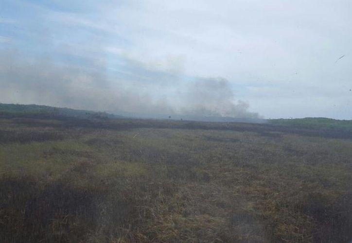 La temporada de incendios en Yucatán ha resultado atípica, debido a la sequía de los últimos años. Por ahora la Conafor batalla contra un siniestro en humedales de San Felipe. (SIPSE)