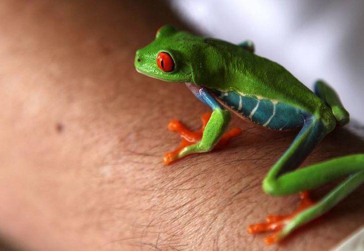 Nicaragua tuvo en 2013 una merma del 29 % en sus exportaciones de animales exóticos, que le reportaron 150 mil dólares. (EFE)