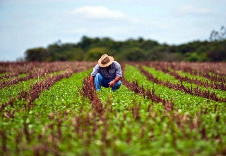 Profesionales hacen pruebas de la efectividad de nuevos fertilizantes. (Agencias)