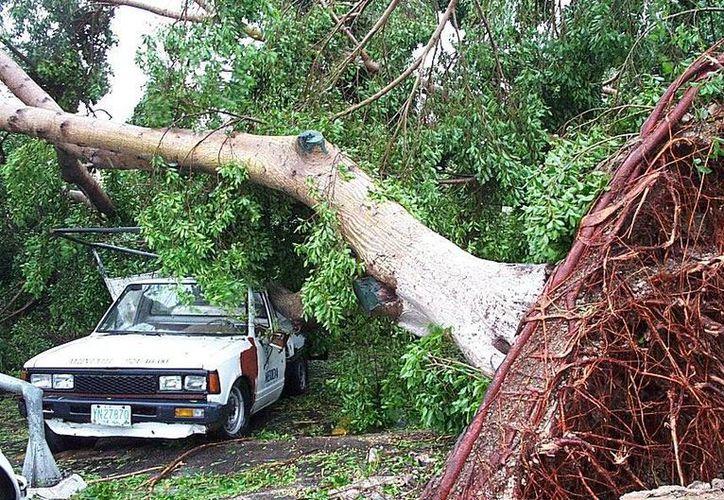 Los huracanes intensos pueden provocar daños estructurales en edificaciones, arrancar árboles y propiciar inundaciones. (Archivo/SIPSE)