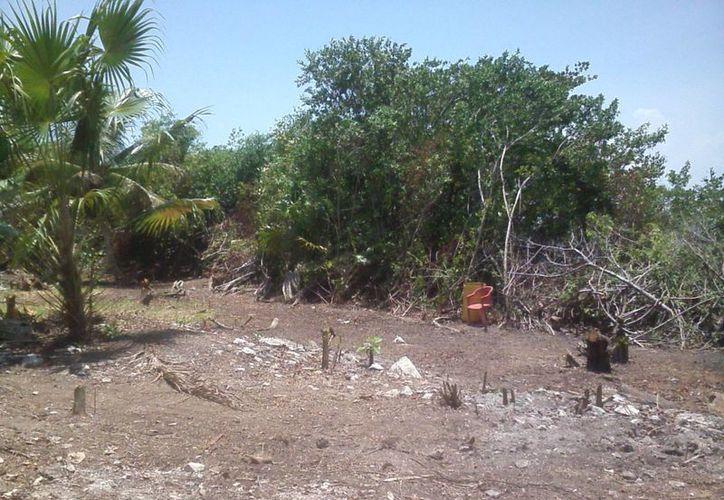 La zona de manglar se ubica a la altura de la laguna Nichupté. (Itzel Chan/SIPSE)