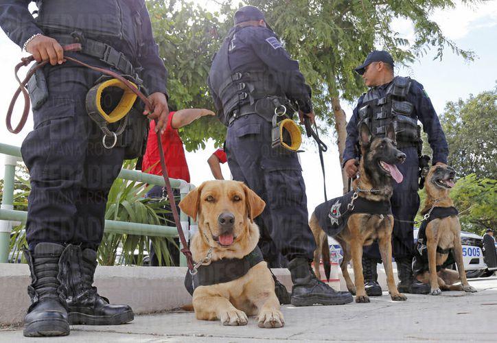 La llegada de los binomios y policías está programada para el 20 de diciembre. (Foto: Ivett Y Coss)