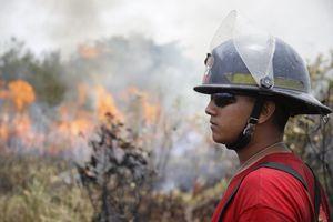 Incendio en zona de manglar en Cancún