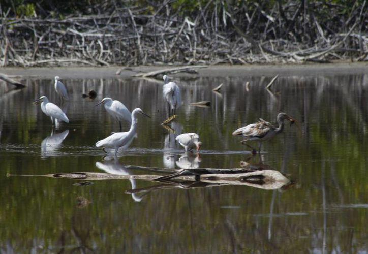 Se ofrecerán caminatas en la selva, visitas a zonas arqueológicas, pantanos, lagunas y cenotes. (Sergio Orozco/SIPSE)