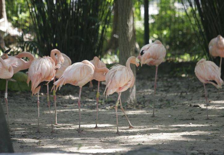 El parque zoológico recibe los fines de semana entre 250 y 300 personas. (Redacción/SIPSE)