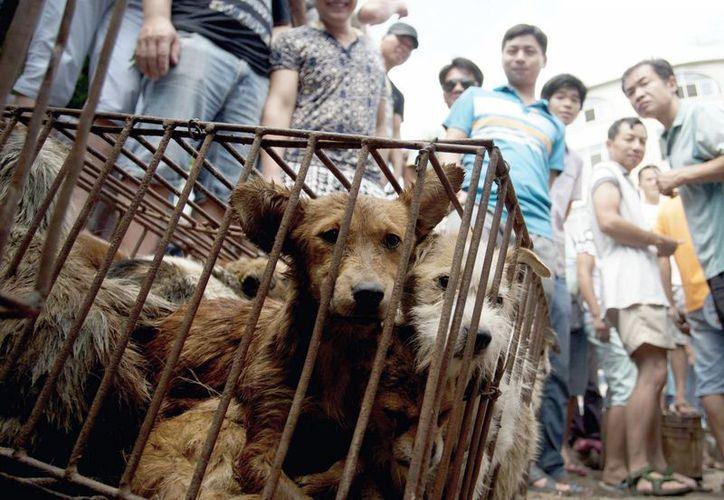 Se calcula que entre 10 y 20 millones de perros son sacrificados cada año en China por su carne. (Agencias)