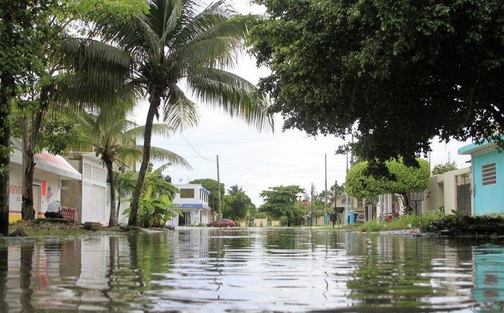 De acuerdo con el reporte del Honorable Cuerpo de Bomberos, fueron ocho los árboles derribados por los vientos que trajo la lluvia. (Carlos Horta/SIPSE)