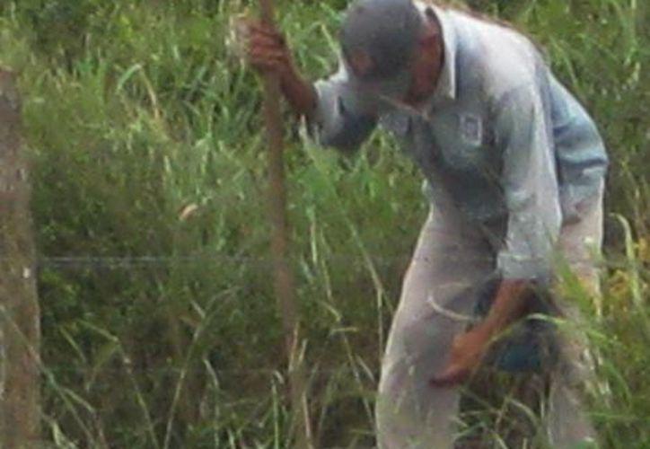 Los productores campesinos que viven en el campo difícilmente pueden acceder a créditos federales.  (Javier Ortiz/SIPSE)